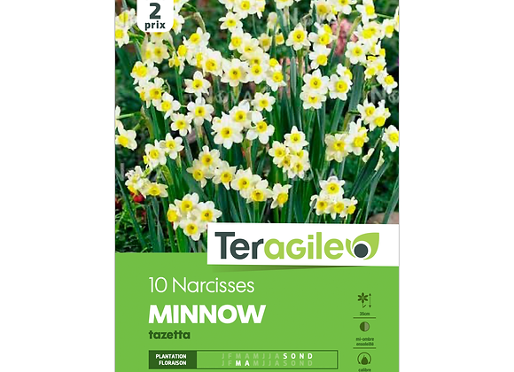 BULBES DE NARCISSES 'MINNOW' TAZETTA - TERAGILE® - X10