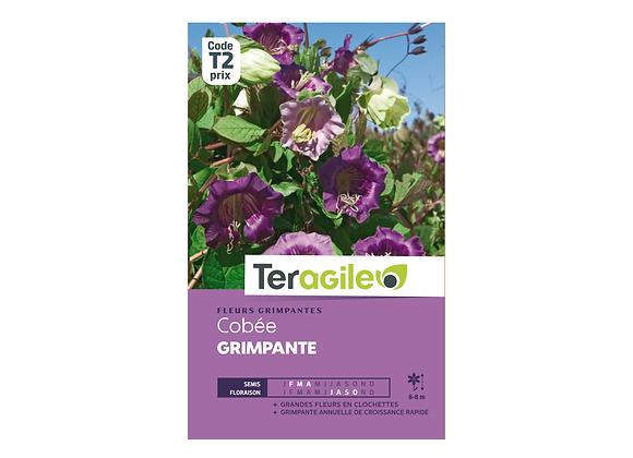 GRAINES COBÉE GRIMPANTE 2G TERAGILE®