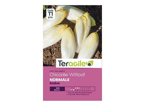 GRAINES CHICORÉE WITLOOF NORMALE ENDIVE 5G TERAGILE®