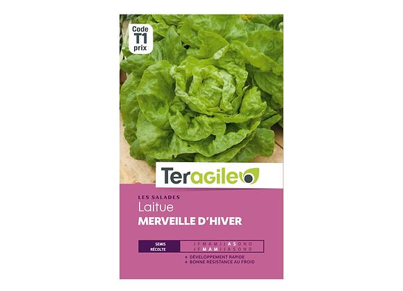 GRAINES LAITUE MERVEILLE D'HIVER 4G TERAGILE®