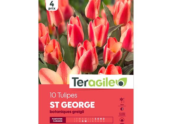 BULBES DE TULIPES 'ST GEORGE' BOTANIQUES GREIGII - TERAGILE® - X10