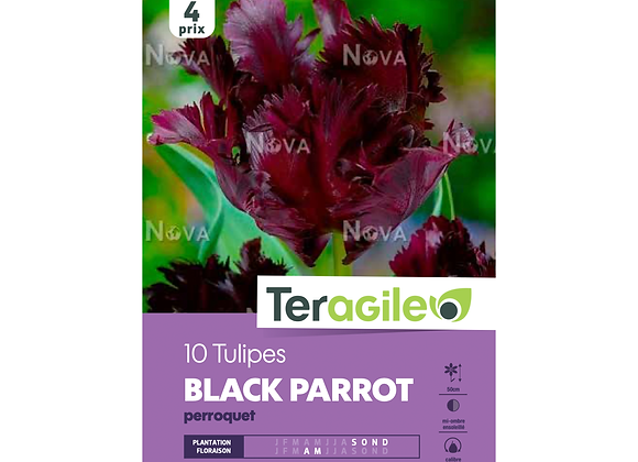 BULBES DE TULIPES 'BLACK PARROT' PERROQUET - TERAGILE® - X10