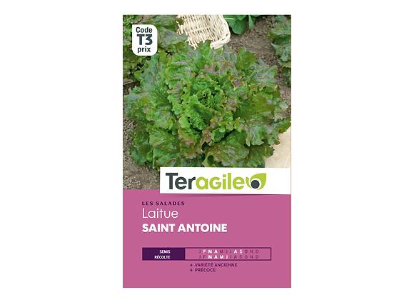 GRAINES LAITUE SAINT ANTOINE 1G TERAGILE®