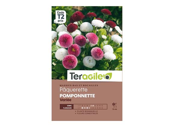 GRAINES PÂQUERETTE POMPONNETTE VARIÉE 0.2G TERAGILE®