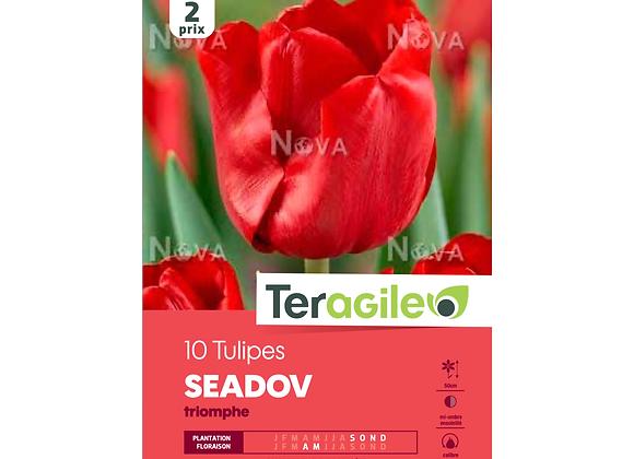 BULBES DE TULIPES 'SEADOV' TRIOMPHE - TERAGILE® - X10