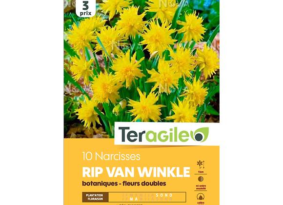 BULBES DE NARCISSES 'RIP VAN WINKLE' BOTANIQUES - FLEURS DOUBLES -TERAGILE®- X10