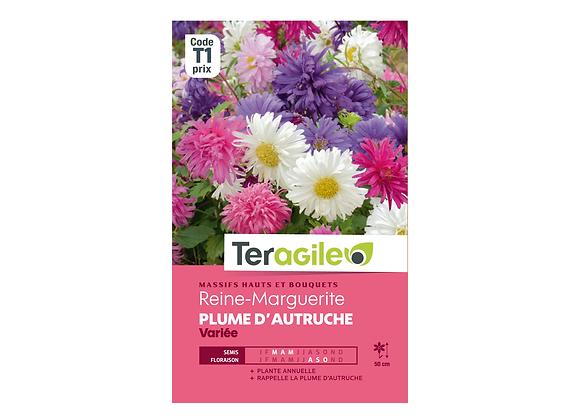 GRAINES REINE-MARGUERITE PLUME D'AUTRUCHE VARIÉE 1G TERAGILE®