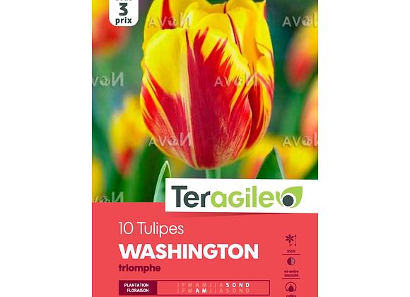 BULBES DE TULIPES 'WASHINGTON' TRIOMPHE - TERAGILE® - X10