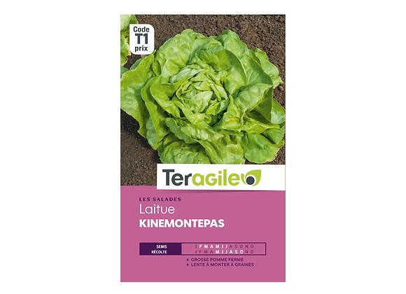 GRAINES LAITUE KINEMONTEPAS 4G TERAGILE®