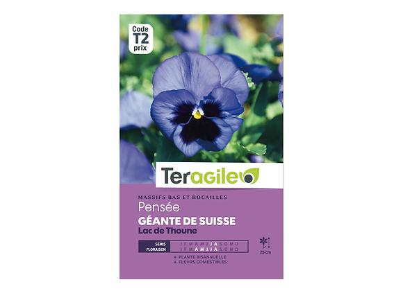 GRAINES PENSÉE GÉANTE SUISSE LAC DE THOUNE 0.5G TERAGILE®