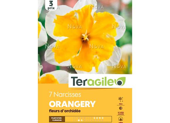 BULBES DE NARCISSES 'ORANGERY' FLEURS D'ORCHIDÉE - TERAGILE® - X7