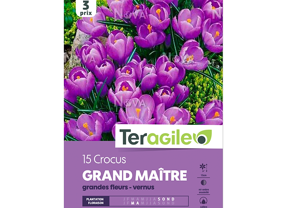 BULBES DE CROCUS 'GRAND MAÎTRE' GRANDES FLEURS - VERNUS - TERAGILE® - X15