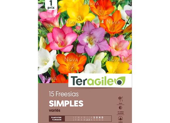 BULBES DE FREESIAS 'SIMPLE' - VARIÉS - TERAGILE® -  X15