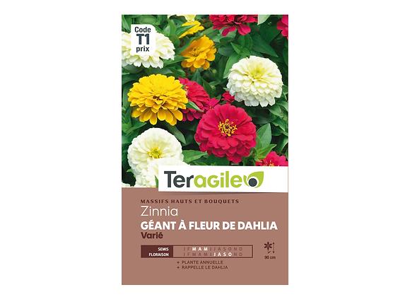GRAINES ZINNIA GÉANT À FLEUR DE DAHLIA VARIÉ 2G TERAGILE®