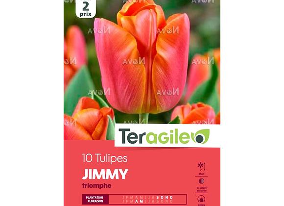 BULBES DE TULIPES 'JIMMY' TRIOMPHE - TERAGILE®- X10