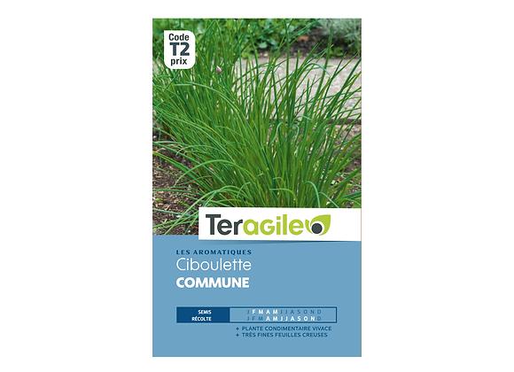 GRAINES CIBOULETTE COMMUNE 1.5G TERAGILE®