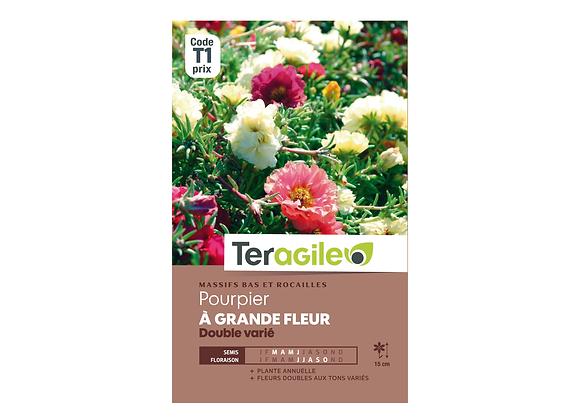 GRAINES POURPIER À GRANDE FLEUR DOUBLE VARIÉ 0.7G TERAGILE®