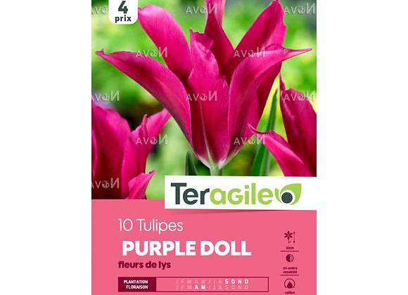 BULBES DE TULIPES 'PURPLE DOLL' FLEURS DE LYS - TERAGILE® - X10