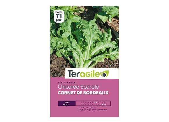 GRAINES CHICORÉE SCAROLE CORNET DE BORDEAUX 4G TERAGILE®