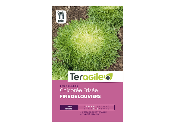 GRAINES CHICORÉE FRISÉE FINE DE LOUVIERS 4G TERAGILE®