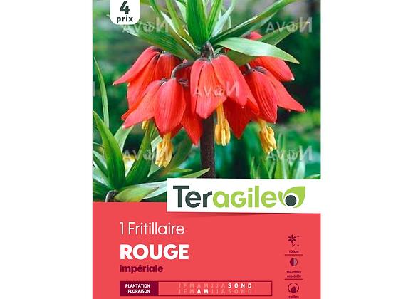 BULBE DE FRITILLAIRE 'ROUGE' IMPÉRIALE - TERAGILE® - X1