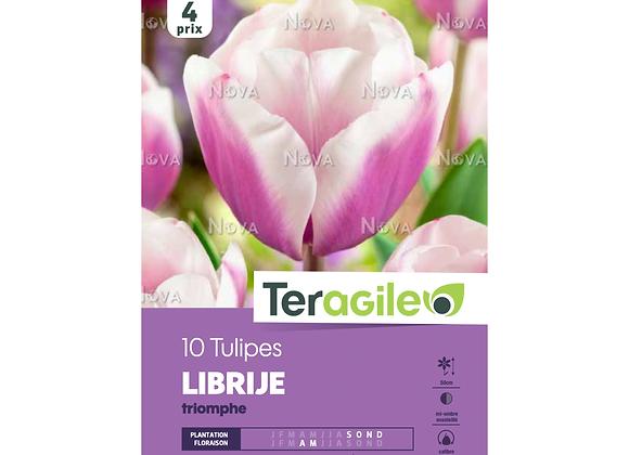 BULBES DE TULIPES 'LIBRIJE' TRIOMPHE - TERAGILE® - X10