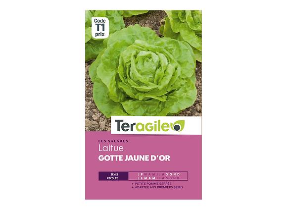 GRAINES LAITUE GOTTE JAUNE D'OR 4G TERAGILE®