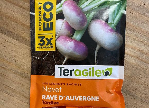 GRAINES NAVET RAVE D'AUVERGNE TARDIVE GT