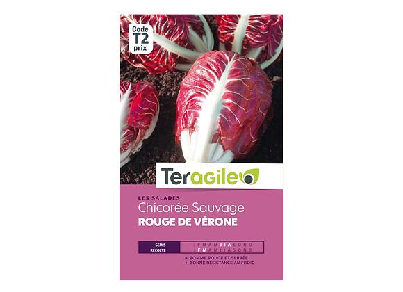 GRAINES CHICORÉE SAUVAGE ROUGE DE VÉRONE 6G TERAGILE®