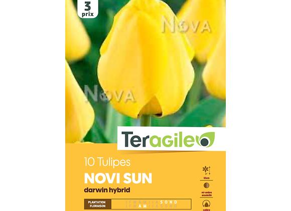 BULBES DE TULIPES 'NOVI SUN' DARWIN HYBRID - TERAGILE® - X10