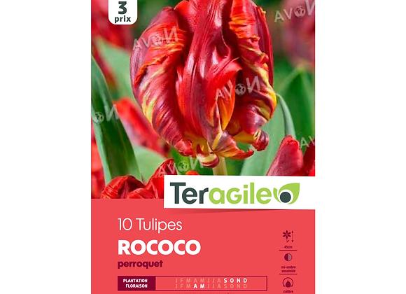 BULBES DE TULIPES 'ROCOCO' PERROQUET - TERAGILE® - X10