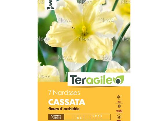 BULBES DE NARCISSES 'CASSATA' FLEURS D'ORCHIDÉE - TERAGILE® - X7