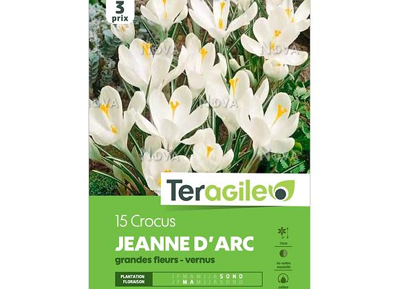 BULBES DE CROCUS 'JEANNE D'ARC' GRANDES FLEURS - VERNUS - TERAGILE® - X15