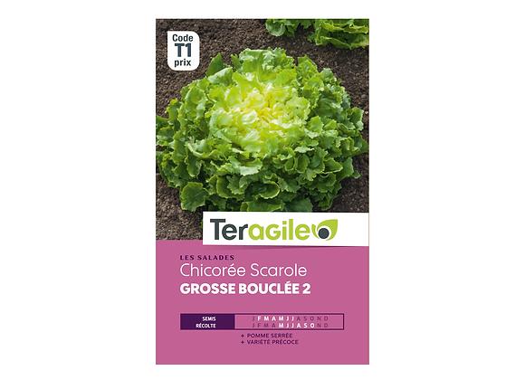 GRAINES CHICORÉE SCAROLE GROSSE BOUCLÉE 2 4G TERAGILE®
