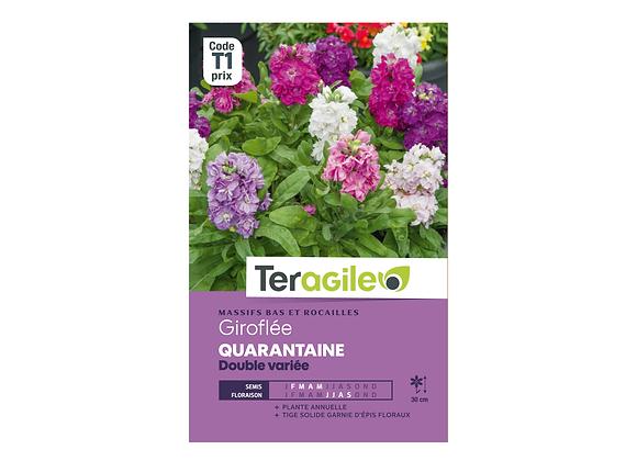 GRAINES GIROFLÉE QUARANTAINE DOUBLE VARIÉE 0.5G TERAGILE®