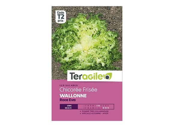 GRAINES CHICORÉE FRISÉE WALLONNE RACE EVA 3G TERAGILE®