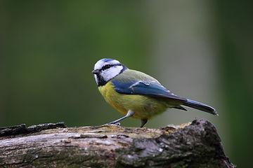 oiseau-de-la-nature.jpg