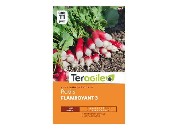 GRAINES RADIS FLAMBOYANT 3 9G TERAGILE®