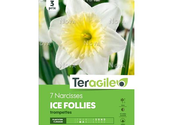 BULBES DE NARCISSES 'ICE FOLLIES' TROMPETTES - TERAGILE® - X7