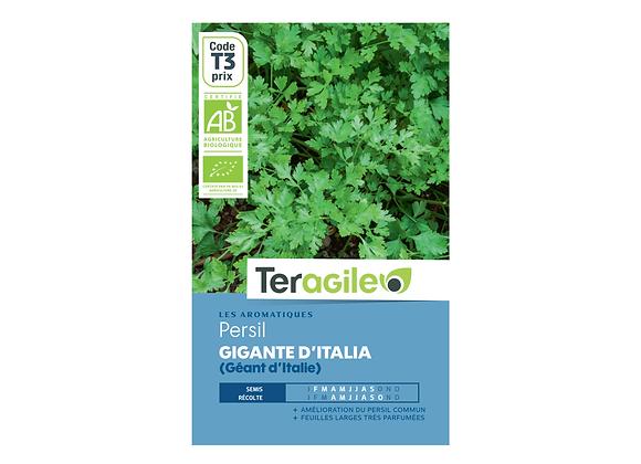 GRAINES PERSIL GÉANT D'ITALIE (GIGANTE D'ITALIA) BIO 3G TERAGILE®