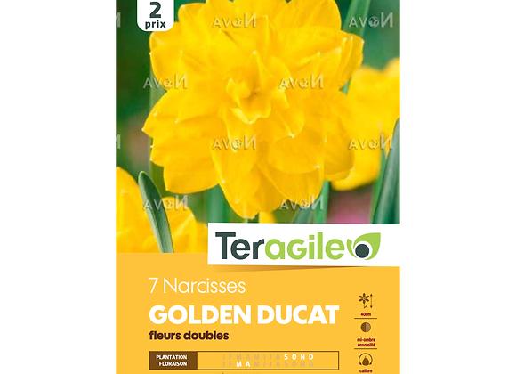 BULBES DE NARCISSES 'GOLDEN DUCAT' FLEURS DOUBLES - TERAGILE® - X7