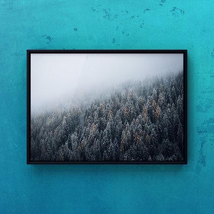 Bosco con nebbia, Pinzolo