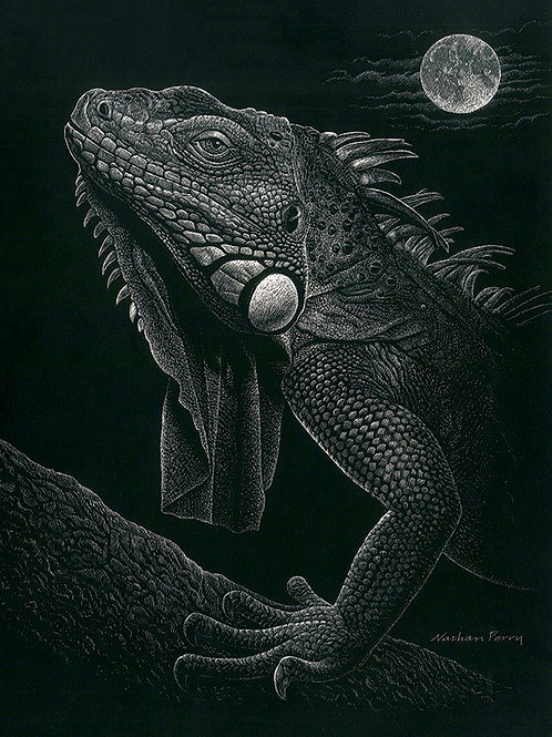 """""""Iguana and Moon"""" by Nathan Perry"""