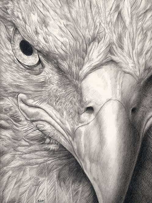 """Eagle Eye"" by Nathan Perry"