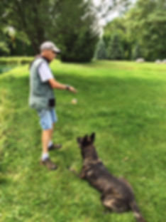 common scents k9 dog training northern kentucky