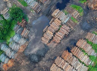 Adanya Larangan Permanen Penggundulan Hutan, Namun Deforestasi di Indonesia Meningkat