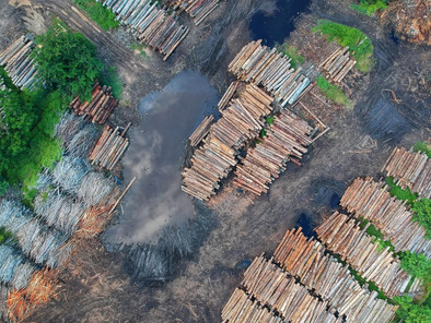 Permanent Ban on Forest Clearing yet Deforestation in Indonesia Increases
