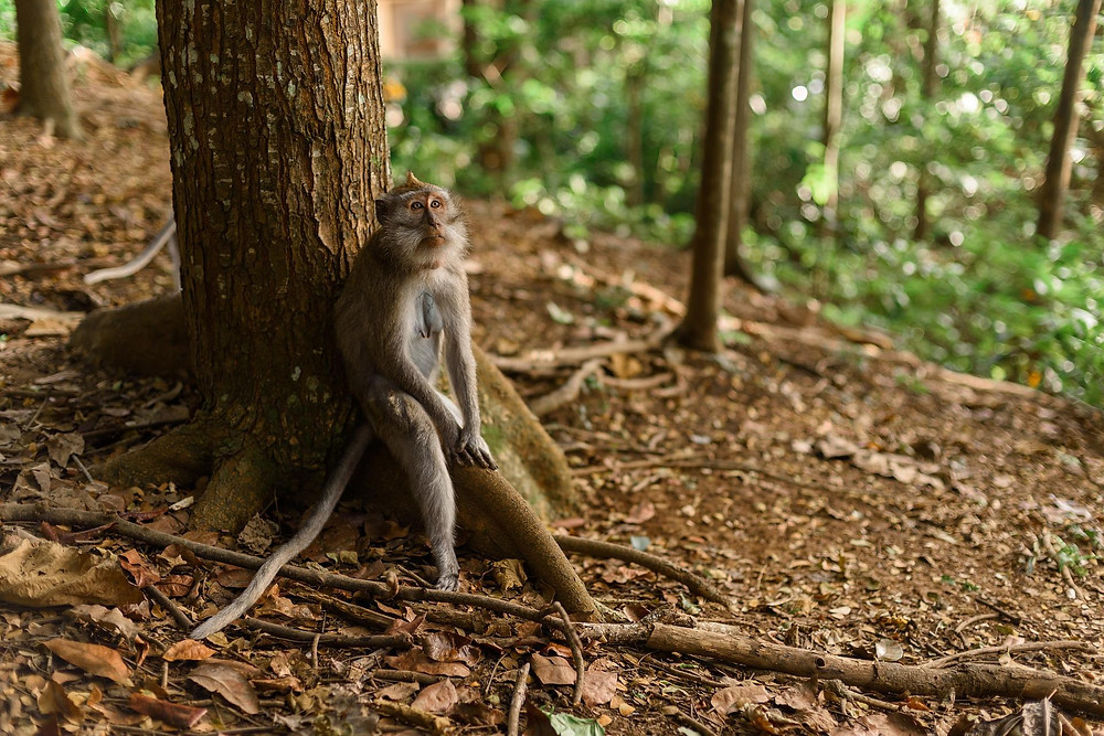 A sad monkey sitting alone in the forest