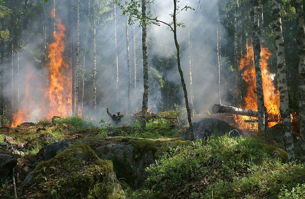 A forest burning