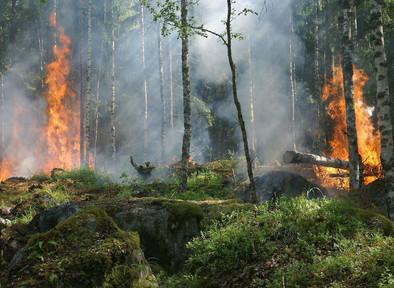 Deforestasi di Indonesia: Kelapa Sawit, Hilangnya Keanekaragaman Hayati dan Pemanasan Global